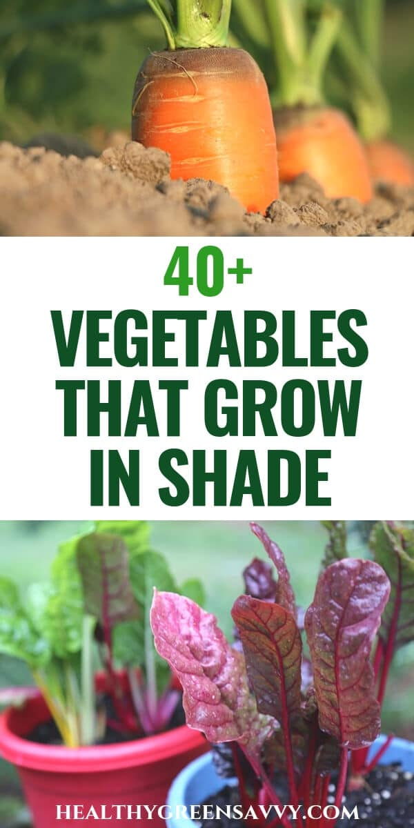 Kids Vegetable Garden Vegetables that grow in shade